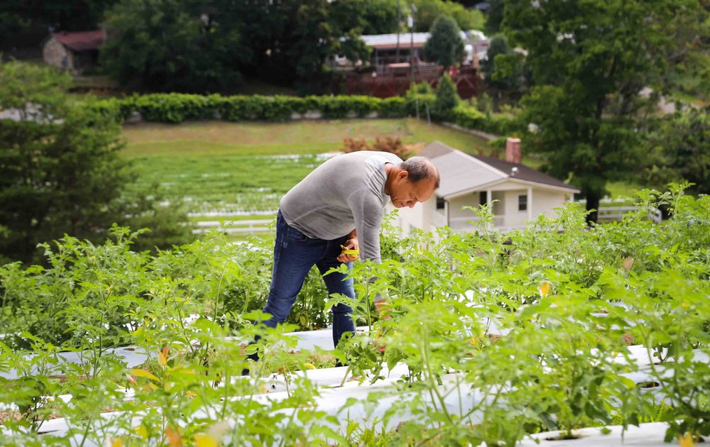 44_Hector picking peppers.jpg