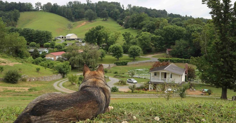 44_Coco surveying the land.jpg