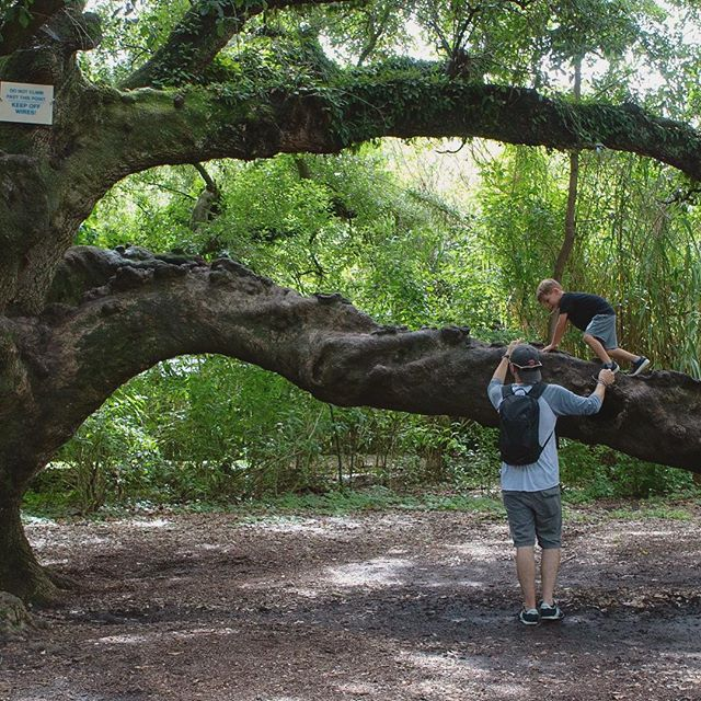 #audubonzoo #neworleand #liveoak #lifetrees #summer2018 #weekendtrip #littlemonkey #climbingtrees