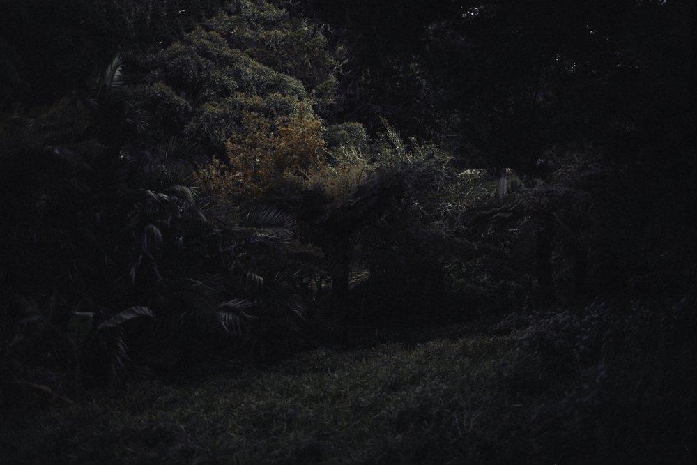 Catherine Frances - Paradise 2.jpg