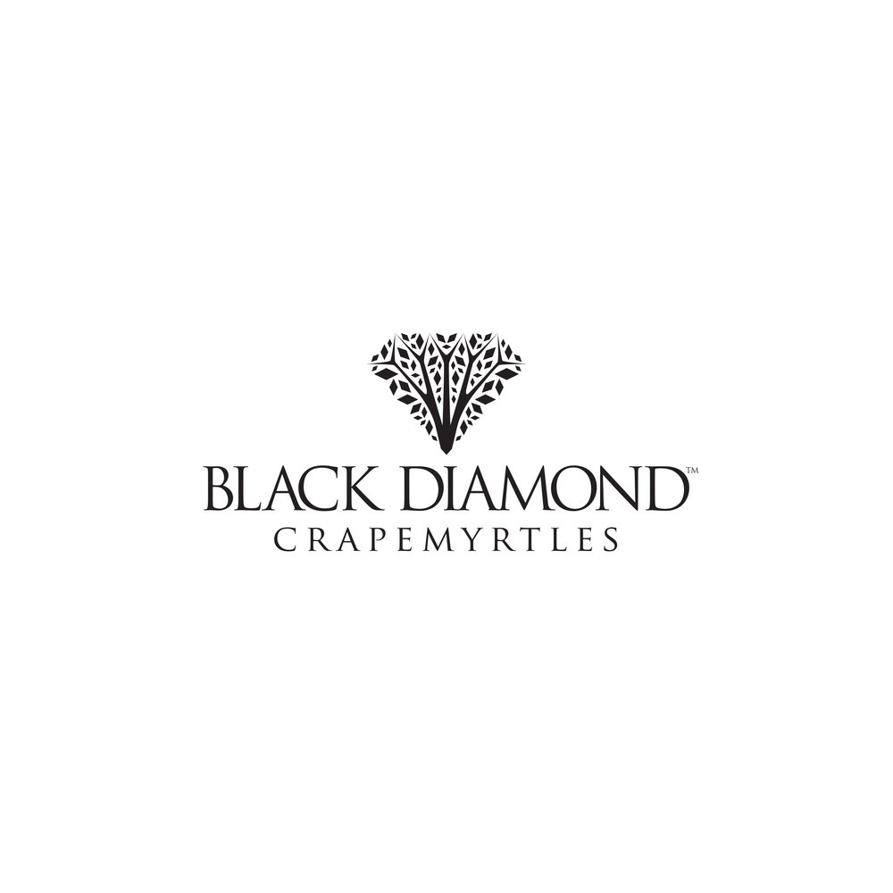 Black Diamond Crapemyrtles