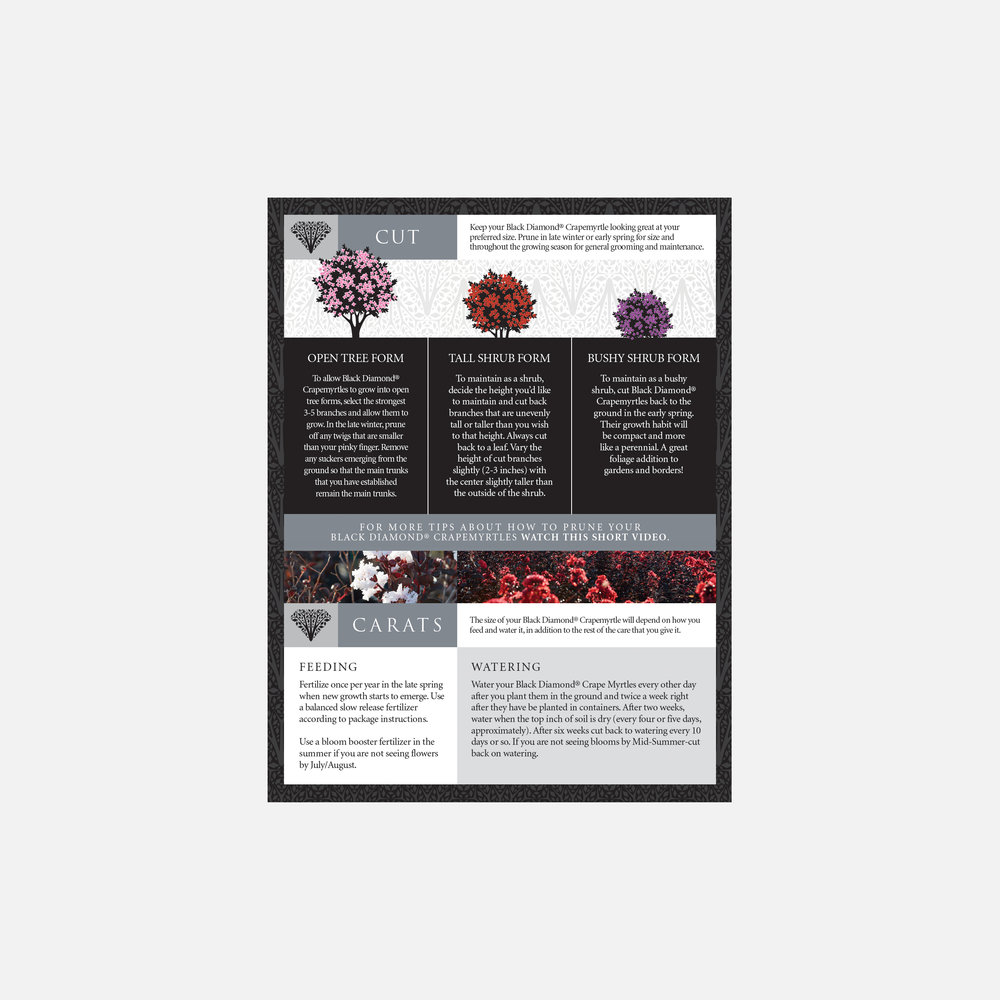 Black Diamond Crapemyrtles care guide