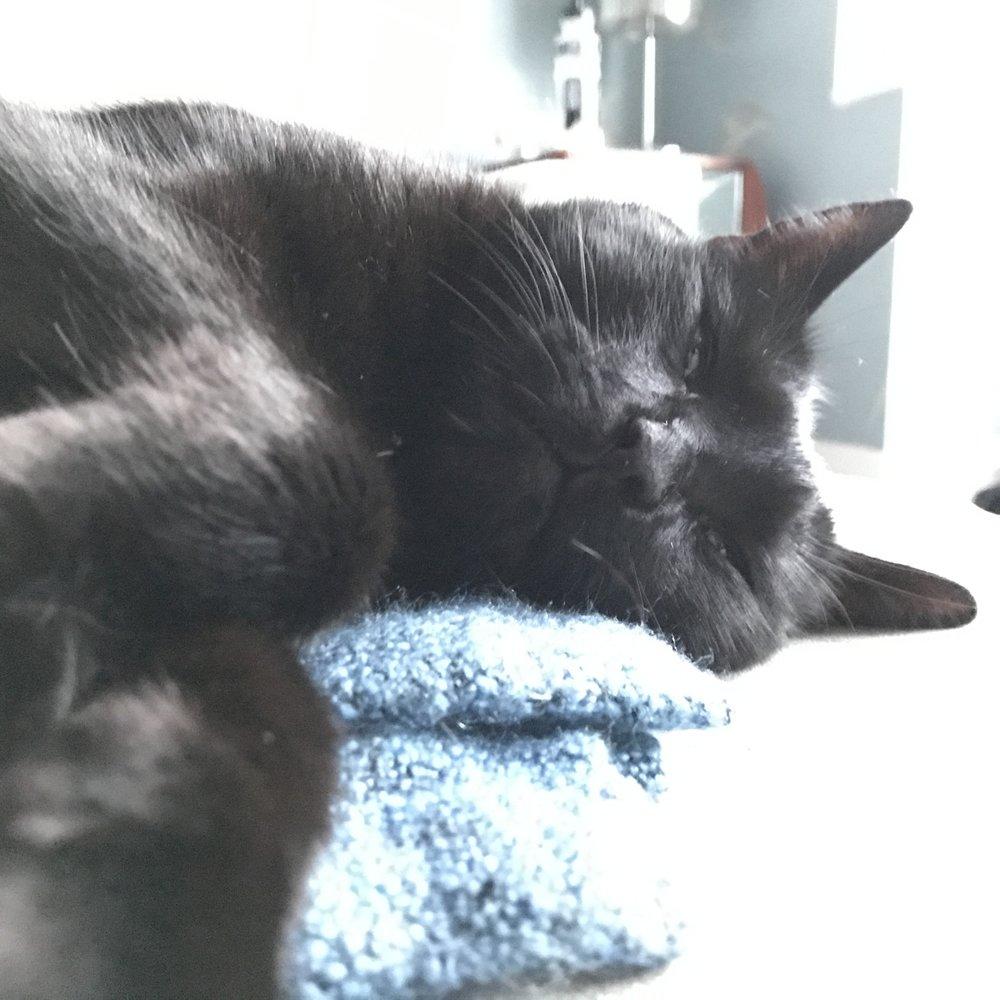 sorrel sleeps.jpeg