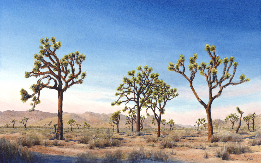 "Lost Horse Valley, Joshua Tree National Park  watercolor  :  15 x 24""  :  print $230  :  original available"