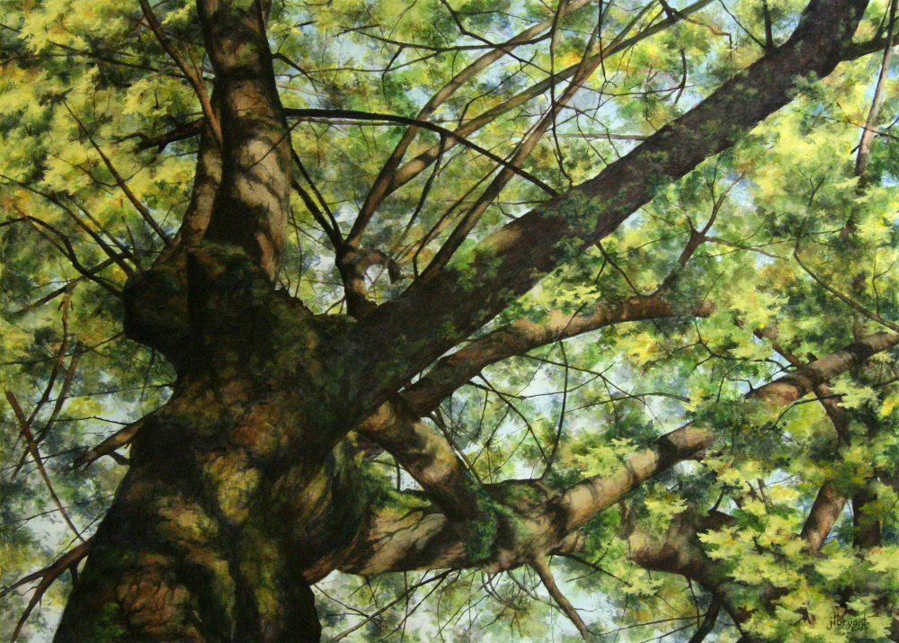 """Norway Maple I  watercolor : 22 x 30"""" : print $275 : original available"""