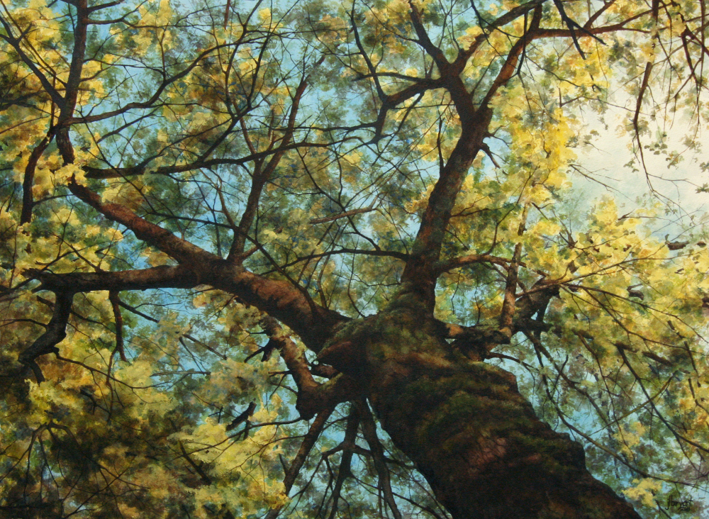 "Norway Maple III  watercolor : 22 x 30"" : print $275 : original available"