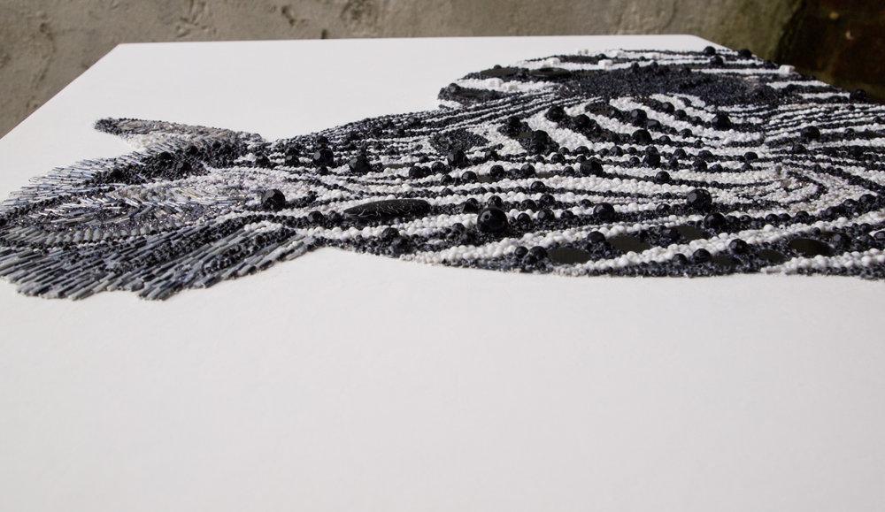 Zebra-8.jpg