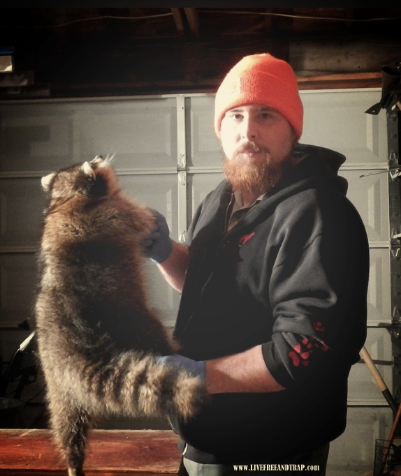 The author with a late-December raccoon.