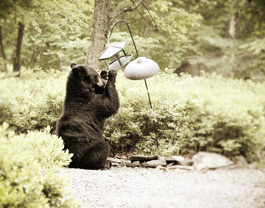bear-1470446_960_720.jpg