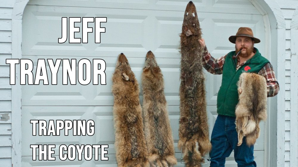 - Jeff sits down with Jay Scott from the Big Buck Registry, for a fireside chat about the Eastern Coyote's biology and trapping. An episode not to be missed for anyone interested in wild canid management!
