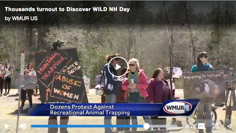 "A news video still from this year's ""Discover WILD NH day"" protest. While volunteer trappers (many of whom are proud fathers and husbands) were inside the event educating the public and our youth about wildlife biology, this was the scene outside the event, and seems to be the message these groups want to get across."
