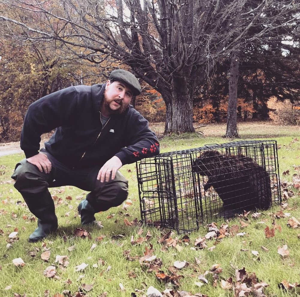 Jeff Traynor with a live-caught beaver trapped in a beaver-specific cage trap. These cages are used in the trapping community for both fur harvesting and nuisance beaver relocation.