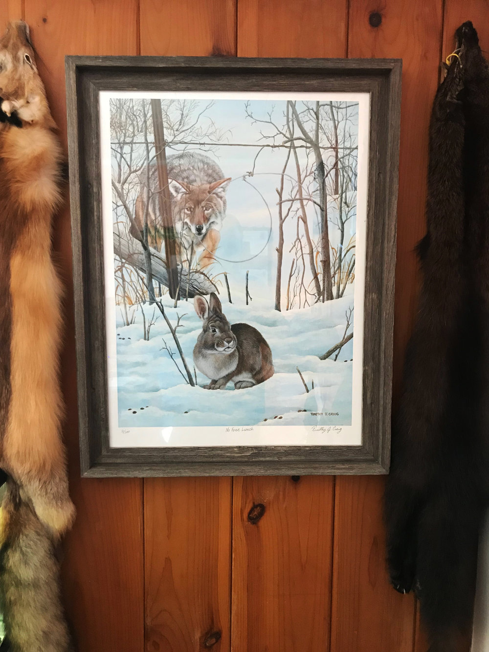 """""""No Free Lunch"""" by Timothy J Craig as it hangs in the Furbearer Conservation office. (Photo 