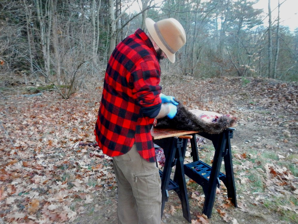 Ryan attempting to skin a roadkill beaver. (Photo | Furbearer Conservation)