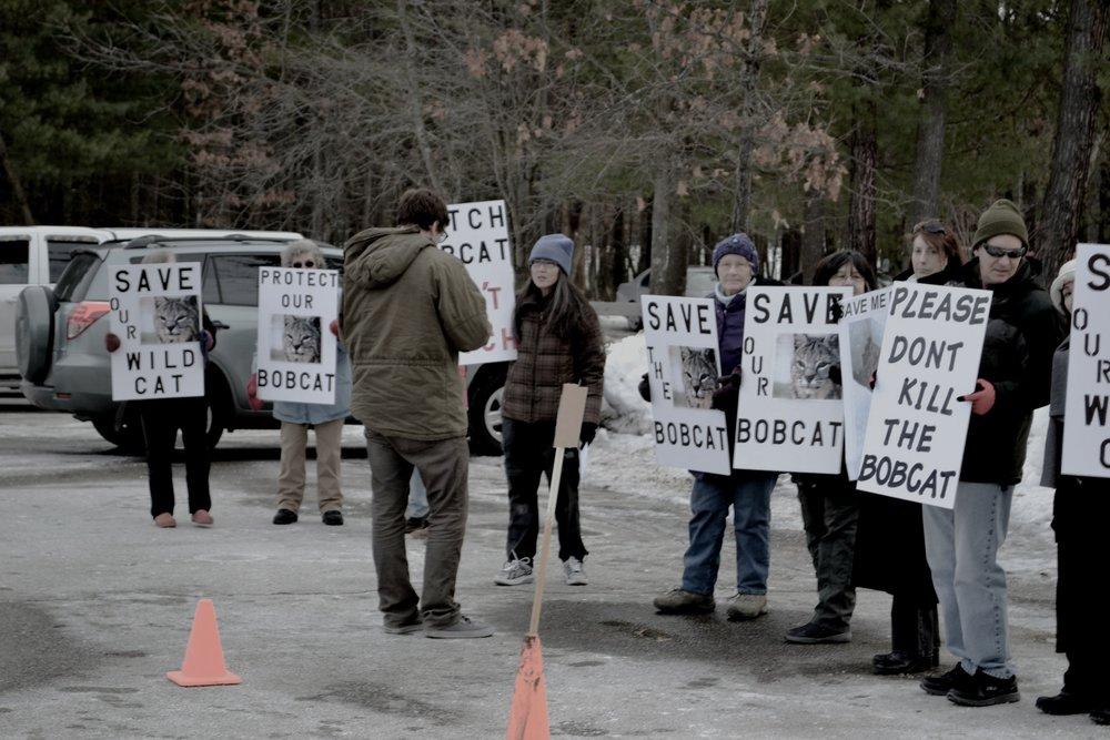 CatProtest.jpg
