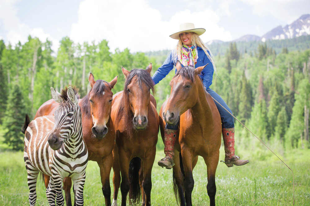 THE 5 GOLDEN RULES TO THE HORSE-HUMAN CONNECTION