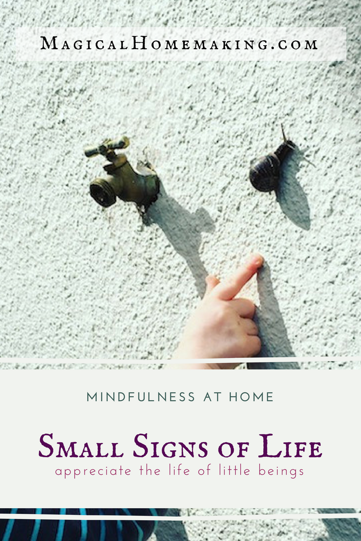 Mindfulness Magic- Small Signs of Life PIN IT.png