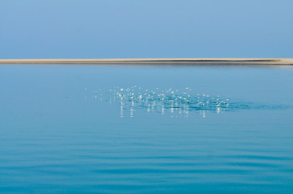 . ديطواح لاجون ، سقطرى - اليمن، الثامن من مايو 2014. سمكة صغيرة تقفز من الماء بجانب المكان الذي تتخذه سعدية موضعا للصيد. تقضي سعدية ساعة في يومها مشيا حتى تعثر على مكانٍ جيد للاصطياد. تستيقظ عادة حوالي الساعة الرابعة صباحا. في هذا الوقت المبكر تذهب سعدية لاصطياد السمك ورعاية أغنامها ثم تعود إلى المنزل حوالي الساعة الثامنة أو التاسعة وقت الضحى لتعد طعام الإفطار والشاي