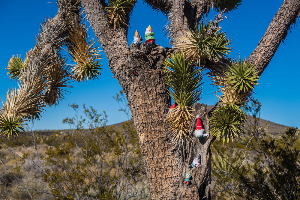 """Possibly our favorite find along the way - the """"Troll Tree""""."""