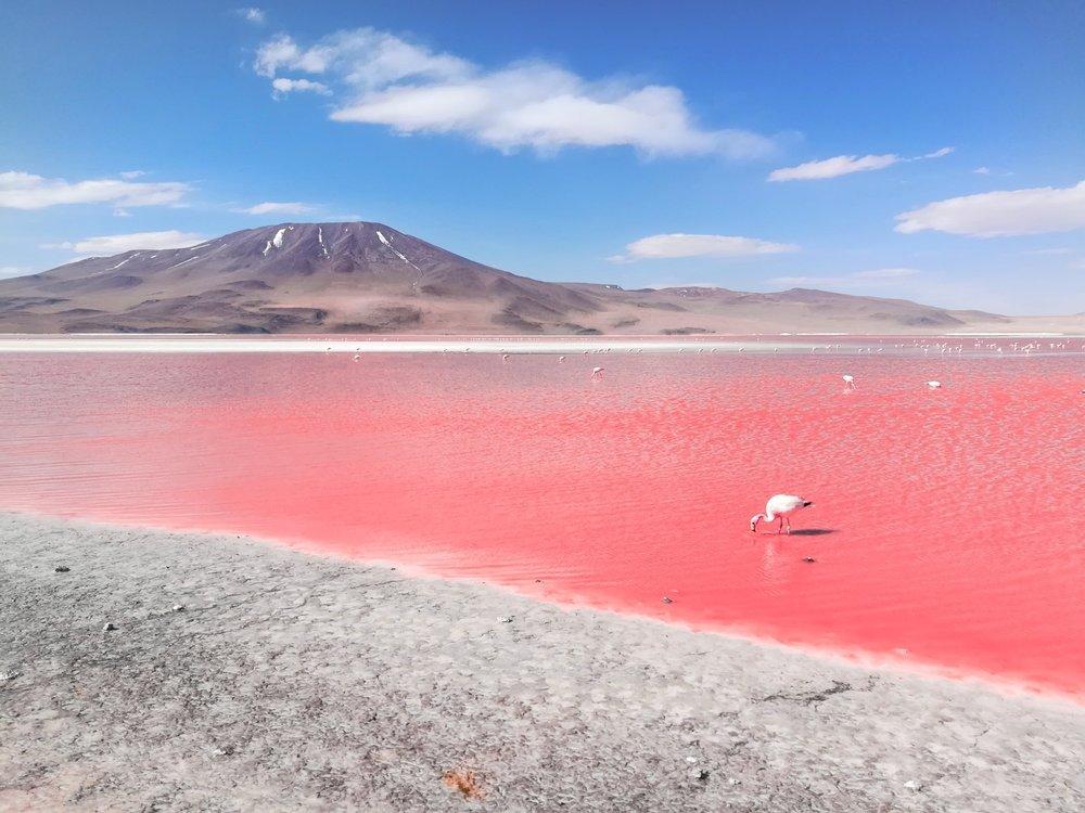 Stunning laguna colorado