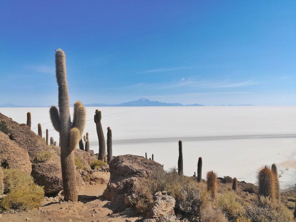 Random cactus island