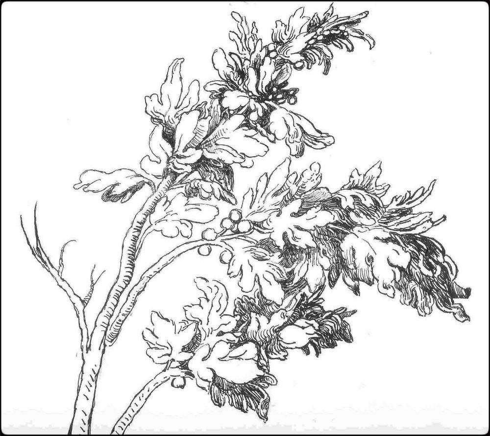 Small Branch Study, after Albrecht Durer, 2005