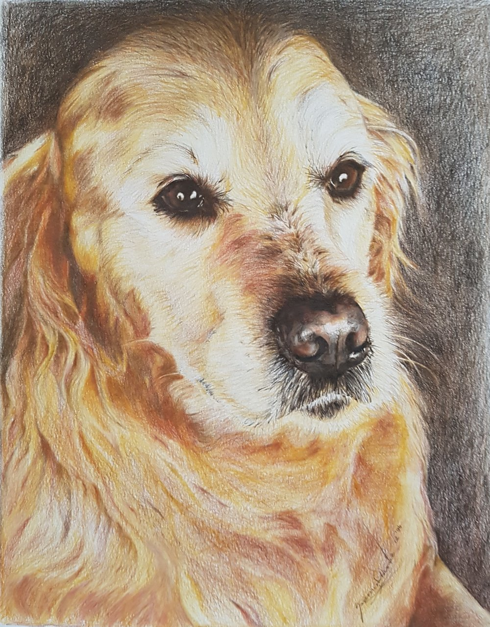 "Golden, 12 x 15"", $900, Coloured Pencil on Paper"
