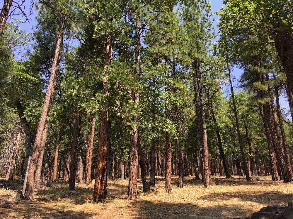 forestlands2