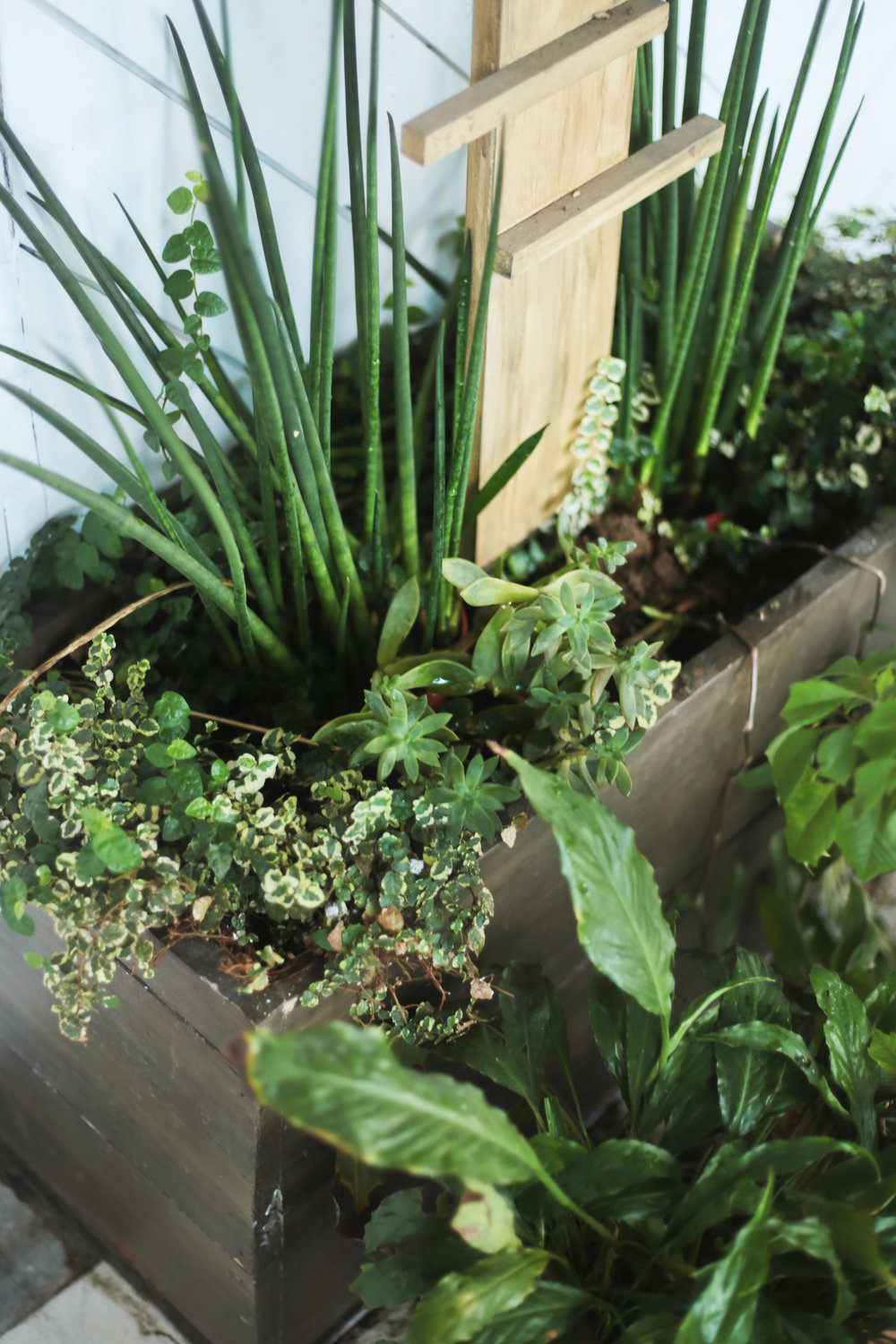 THE ABUNDANCE OF PLANTS PROMOTE CLEAN AIR -