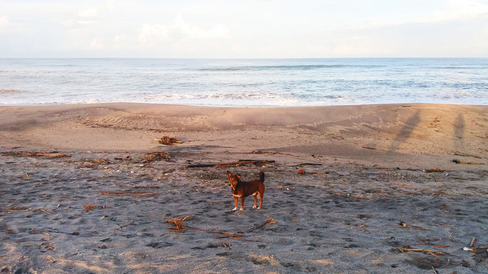 Zambales Philippines Province Beach Dog Surf Town