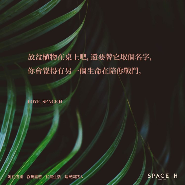 spaceh-hk-quote-11.jpg
