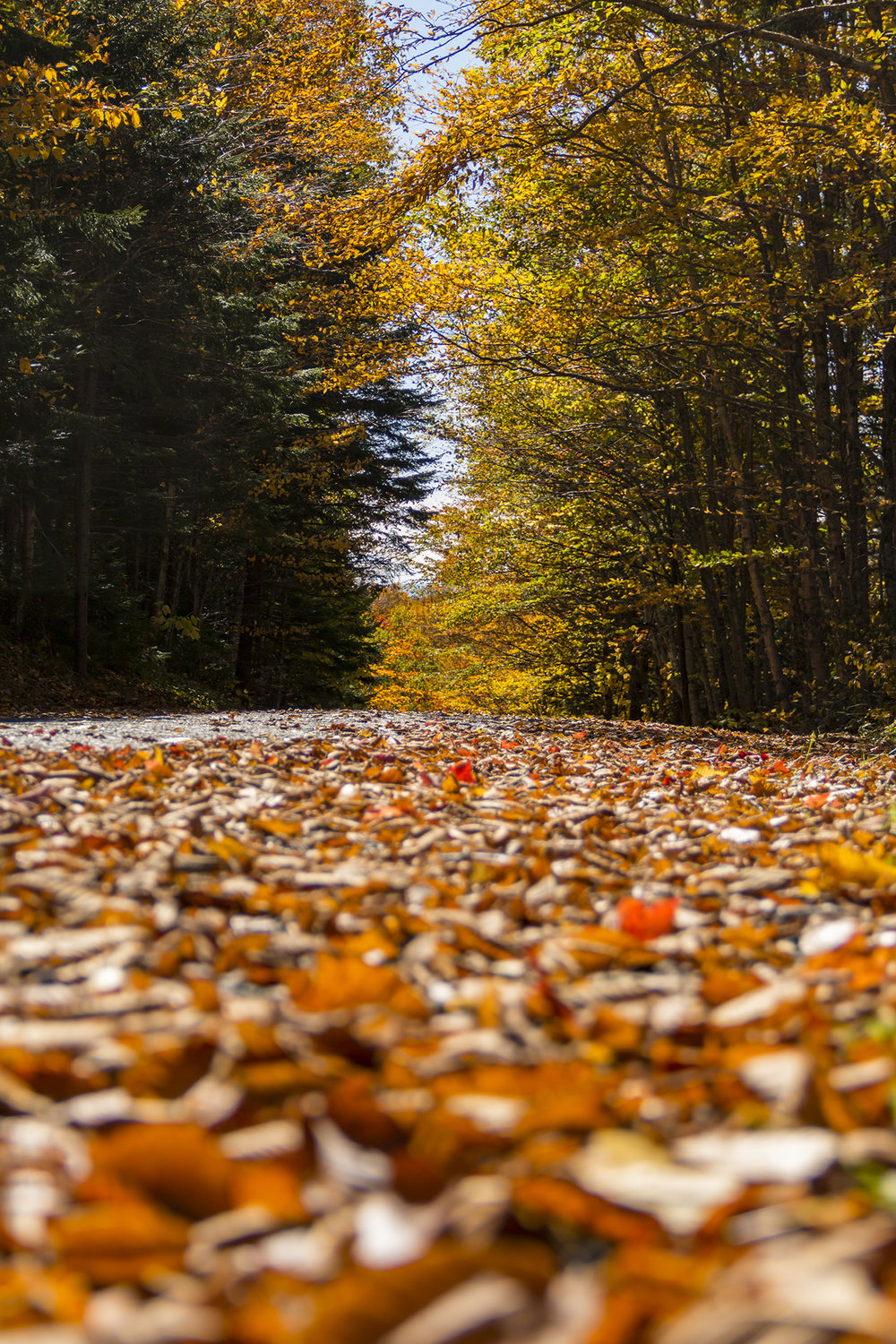 Road-to-Cooler-Weather-BRimages.ca