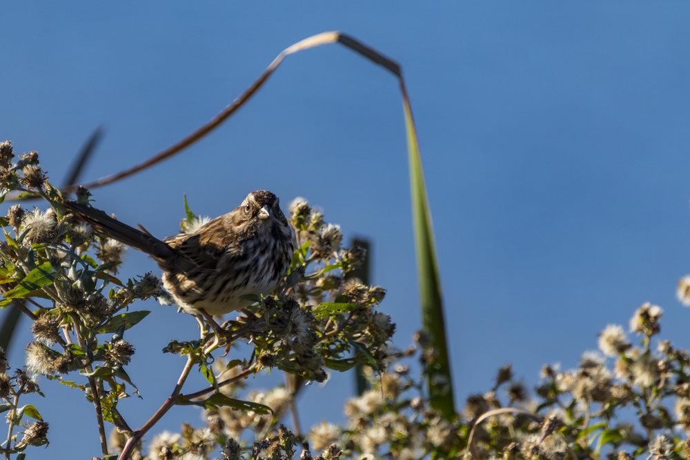 Framed-Songbird-BRimages.ca