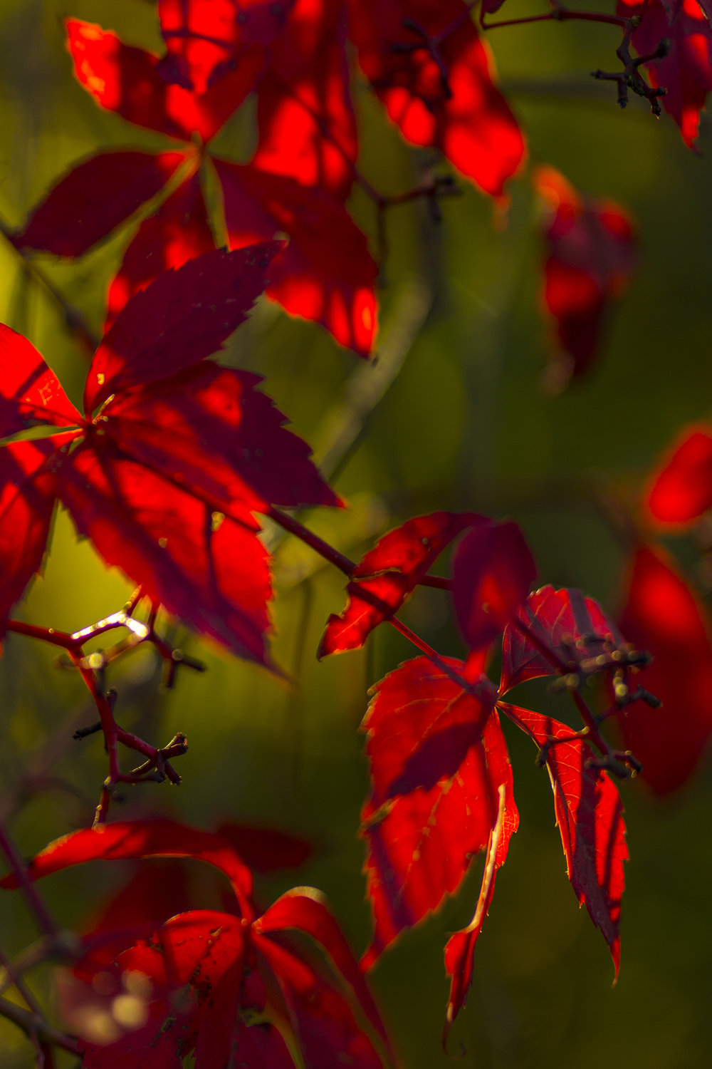 Christmas-Colours-in-the-Fall-BRimages