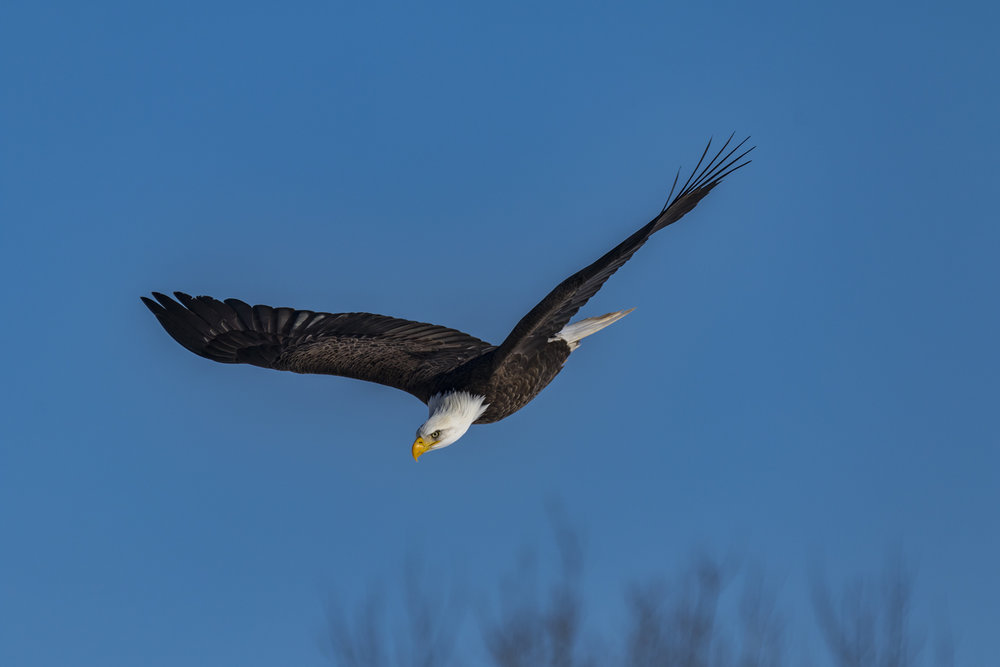 Canon 7D mk II, Sigma 150-600mm Contemporary @ 600mm, 1/1600, f/8, ISO 160 and -1 Exposure Compensation