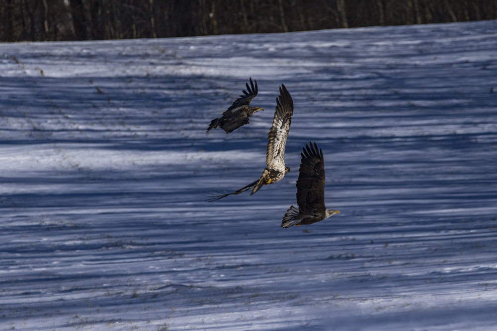 Canon 7D mk II, Sigma 150-600mm Contemporary @ 600mm, 1/1600, f/7.1, ISO 125 and -1 Exposure Compensation