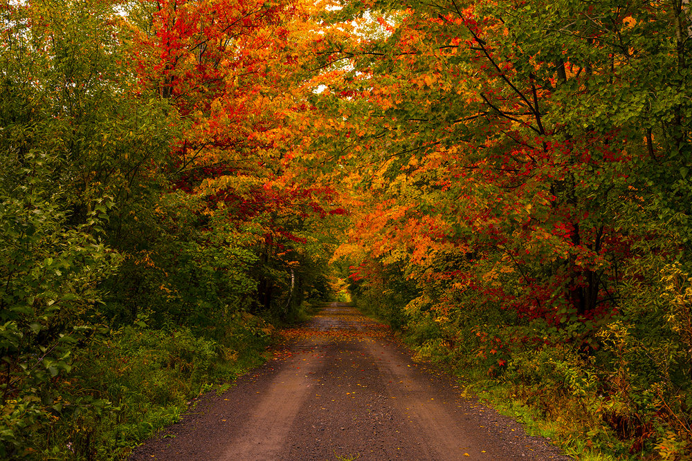 autumn-fall-colours-new-brunswick-canada-2-BRimages.ca