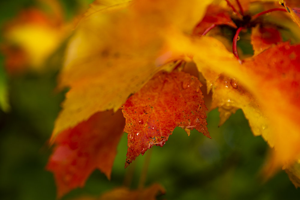 autumn-leaves-new-brunswick-canada-2-BRimages.ca