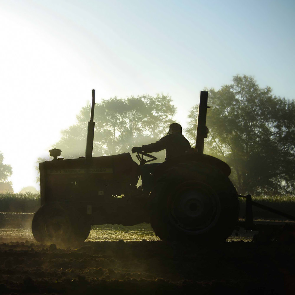 Tractor Daddy.jpg