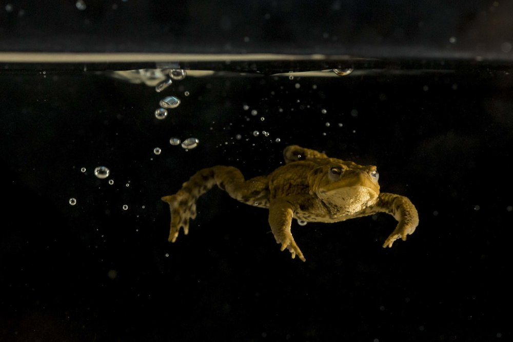 Studio Toad