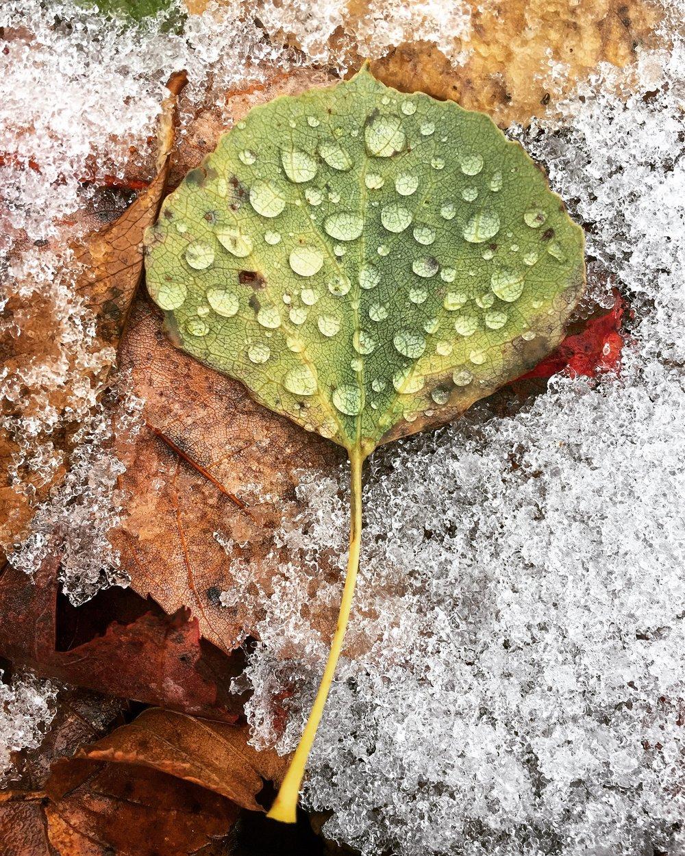 Lone Leaf -