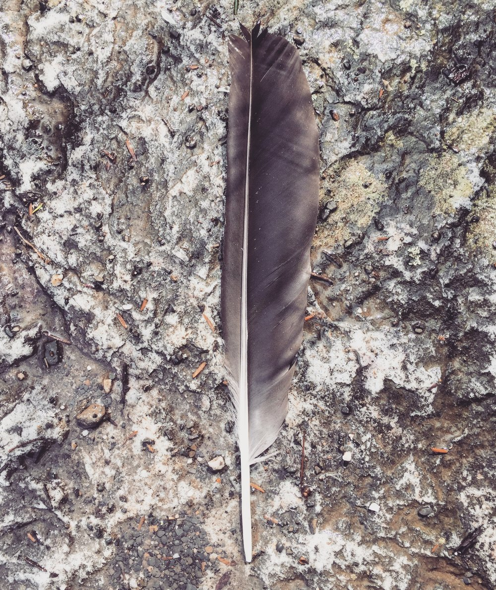 Lone Feather -