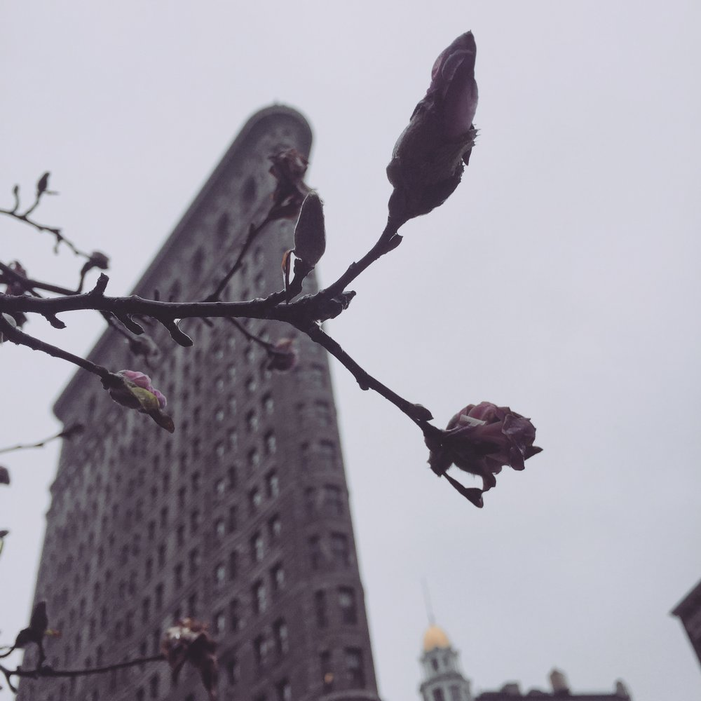 The Flatiron waits for spring