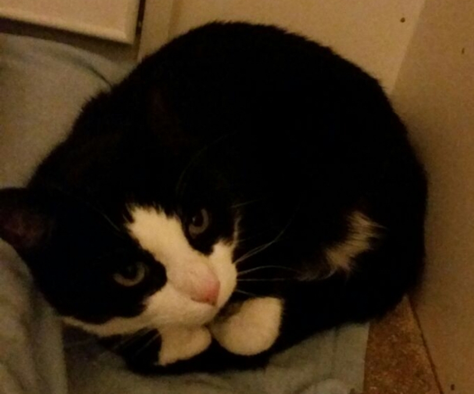 Jack - Adopted Feb 18