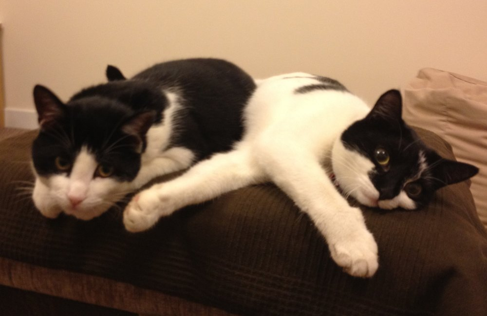 Millie and Timmy are available for adoption via our direct rehoming Scheme - to find out more about them please visit the Direct Rehoming Page....