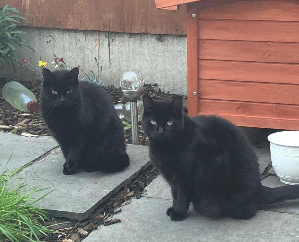 Black cats in garden1.JPG