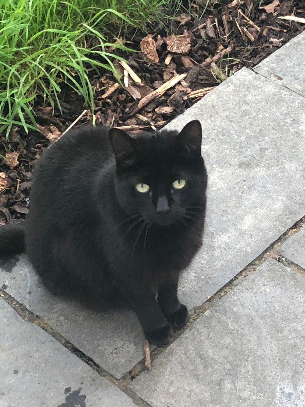 black cats in garden2.JPG