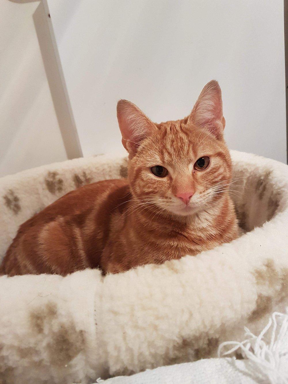 Jasper - Adopted March 18