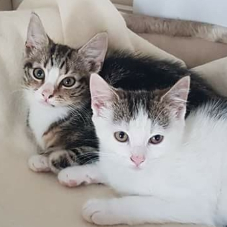 Lily & Louis - Adopted Aug 18