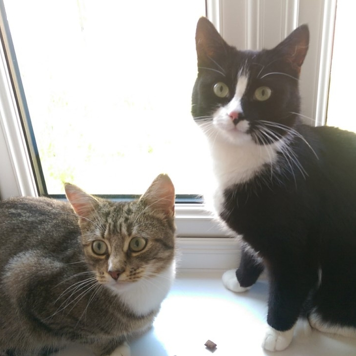 Oreo & Cookie - Adopted Aug 18